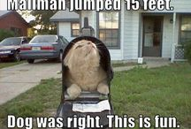 need a laugh / by Jordan Audette
