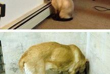 Acessórios para animais estimação