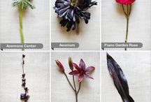 Flower colour schemes