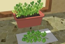 Growing a Green Thumb / Garden and Herbs