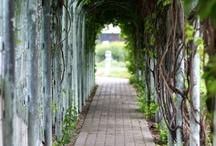 gardens and glories / by Sherri McLaughlin