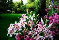 сад Веры Мироновой santolia1