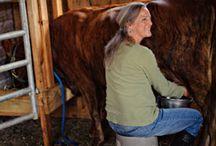 Farming / by Elizabeth Sutton