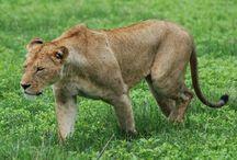 animals / zvieratá,príroda