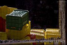 Marchesi Ginori Lisci, Querceto / 2014 Grape Harvest - Photos by Giacomo Saviozzi