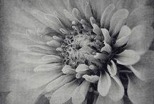 Garden & Flower Photography