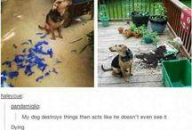 Pet Shaming Awesomeness