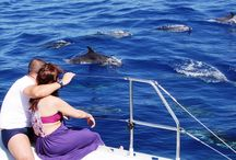 Dolphin & Whale Watching Tours in Madeira Island / Dolphin & Whale Watching in Madeira Island. Come to Madeira for a close encounter with some of the 28 species of cetaceans that inhabit or visit these waters. Who knows? You might have the chance to swim with dolphins!  More info & Bookings: http://madeira.best/product-category/ocean/dolphin-whale-watching/