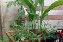 Le mie piante / Fiori e piante di casa e dintorni