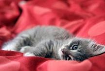    Furry Friends    / cute little animals