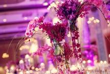 Bordeaux, Gold and Hydrangea Wedding / November 3, 2013  / by Sarah Watson