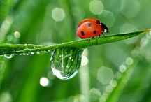 Red Bug In Branch Photo Download   Famous HD Wallpaper