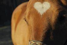 Horses / My biggest passion
