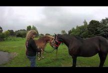 Paarden ~ BrinkSchuur