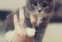 so soo cute
