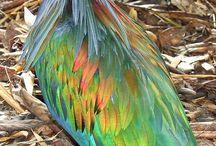 Fancy Feathers / by Eleanoria Lee