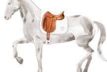 Equipement d'équitation
