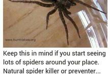 Spider killer