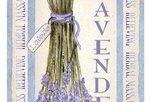 lavender-flower