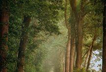 ___woods
