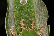 Catapillars to Butterflies