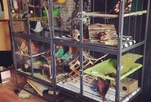 Ferrets / Ranging from care to toys