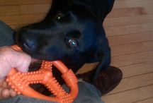 Deuce / Deuce's Day, the life and times of a black Lab