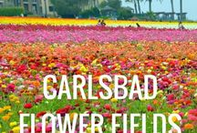 The Best of Carlsbad, California