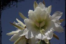 FLORES / Mis flores