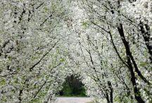 Spring Wonderland