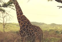 Africa / Adventures, wildlife and safaris to experience while visiting the continent of Africa.
