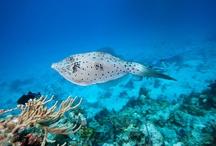 z Animals Ocean Fish