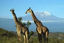 Tanzania here I come!