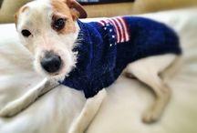 Dog / Jack parson