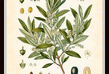 Botanicals