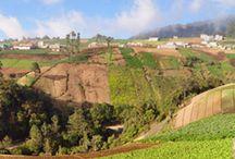Coffee Farms / Ферми / Тук представяме фермите, от които купуваме