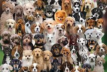 Dog Jigsaw Puzzles / Dog Puzzles from White Mountain Puzzles