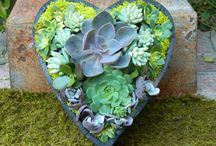 yard and garden ideas / by casey d