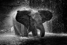 Rainy days / by Kristy Humble