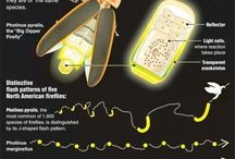 Bio {Light} and environment