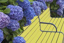 | flower and garden |