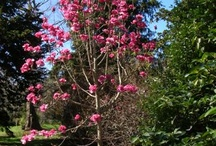 Trees and shrubs I'm planting in my long term garden one day