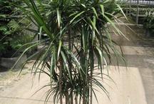 Mis plantas / Plantas que tengo en mi casa