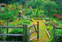 Mams garden
