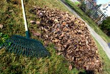 PREPARING THE YARD FOR WINTER / Taking the time to properly prepare your yard for the cold season ahead will ensure it thrives, healthy and strong all year long.