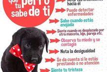 Cosas de tu perro
