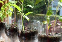 plantas en botella