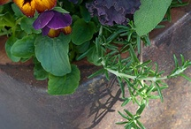 ornamental edibles / by Susan Day