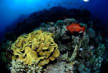 Gamul Kebir / A big reef with a lagoon inside.
