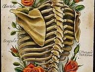 Skulls/skeletons